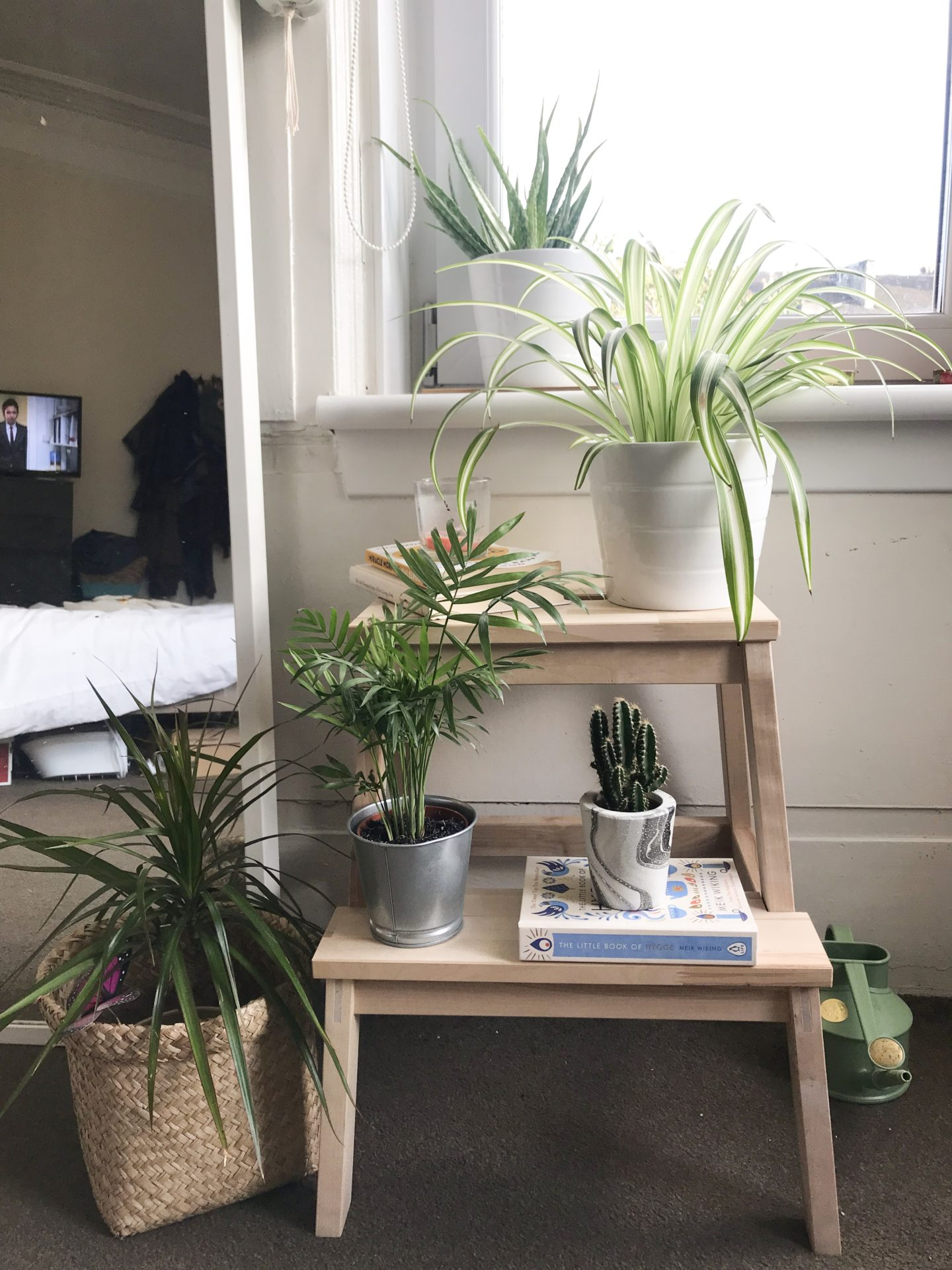 How To Create A Perfect Plant Corner